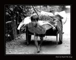 Quy định của Pháp luật Việt Nam về trẻ em, xâm hại tình dục ở trẻ em và bóc lột sức lao động ở trẻ em